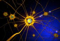Gelbe Nervenzellen