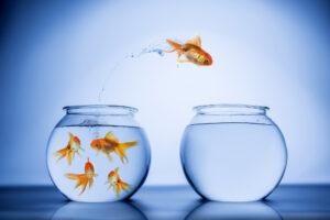Veränderung: Goldfisch springt von einem Glas ins andere