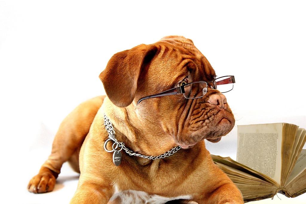 Ein Hund unter dem Schreibtisch hat nur dann Vorteile, wenn er sich anpasst, und auch das Team keine Einwände hat.