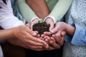 Viele Personen halten eine Pflanze in den Händen