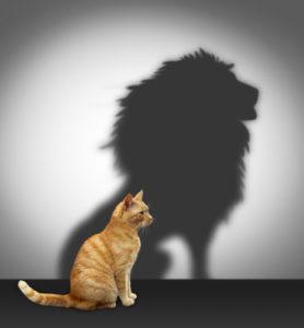 Katze mit Löwen Schatten