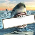 Hai-Werbung