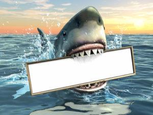 Hai beißt zu
