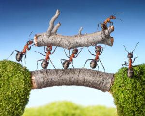 Team von Ameisen tragen Holz über eine Brücke, Teamarbeit