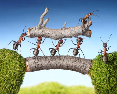 Kooperation ist der Erfolgsfaktor der Zukunft