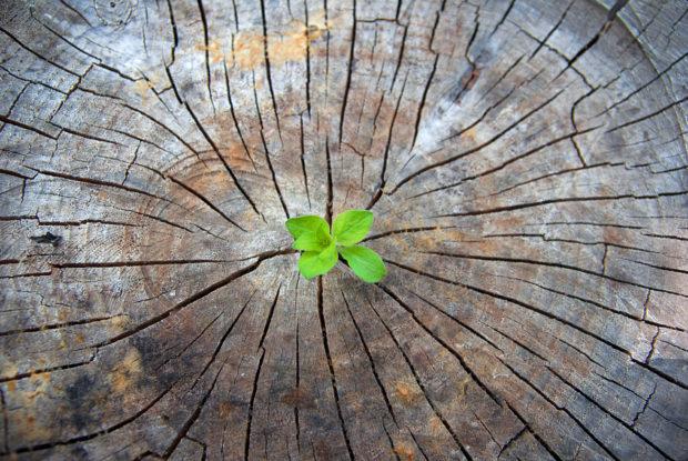 Wie Sie erfolgreich Content-Seeding betreiben