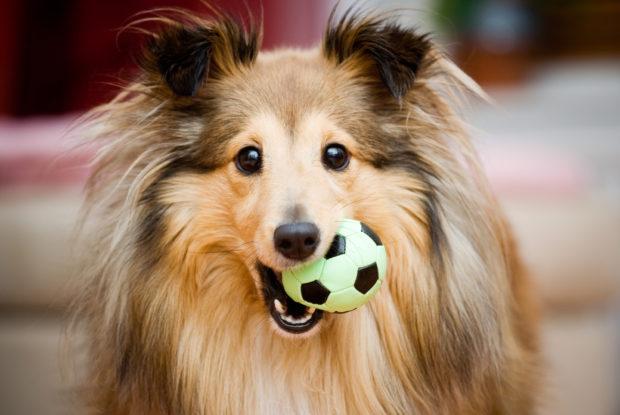 Hunde im Büro sorgen für mehr Engagement und Loyalität gegenüber dem Arbeitgeber