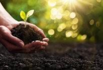 Pflanze mit Erde in einer Hand